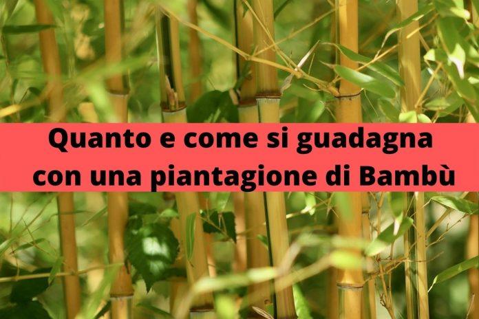 come e quanto si guadagna con una piantagione di bambù
